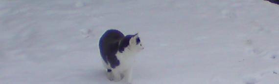 Nyfiken katt