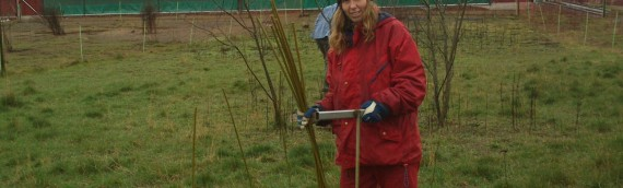 Salix till hönorna