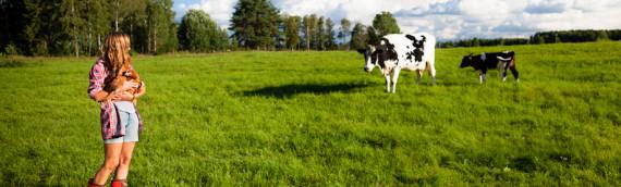 Betessläpp för hönor och kossor?