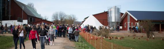 Betessläpp för hönor och kossor 12 maj